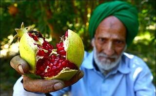 مدیر جهاد کشاورزی بجستان