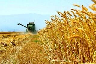 مدیر کشاورزی سازمان موقوفات ملک آستان قدس رضوی