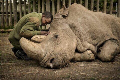 عکس حیوانات کرگدن