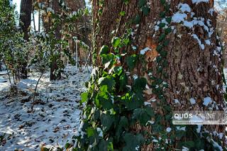 لباس سفیدزمستان و باغ وکیل آباد مشهد