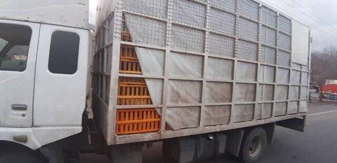 کامیون حمل مرغ
