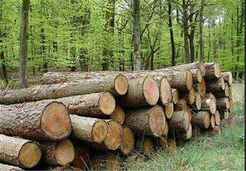 رئيس اتحاديه صنف چوب بران و چوب فروشان مشهد