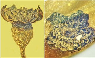 گل صد میلیون ساله