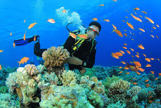 مرجان جزیره خارک