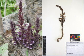 کشف گونه گیاهی جدید