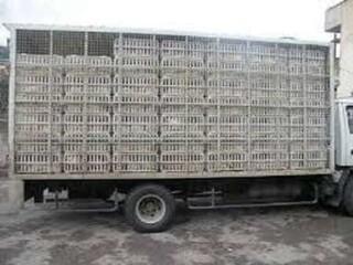 کامیون مرغ