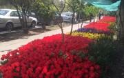 جشنواره «گل سرخ» در  اصفهان برگزار شد