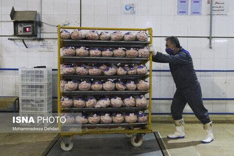 ذخیره مرغ