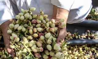 رییس جهاد کشاورزی شهرستان رفسنجان
