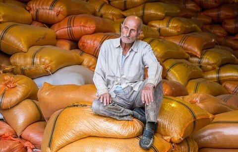 مدیر جهاد کشاورزی رضوانشهر