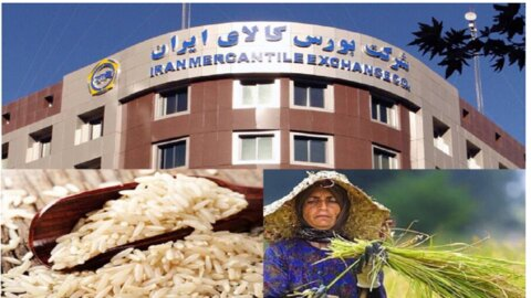 برنج طارم در بورس