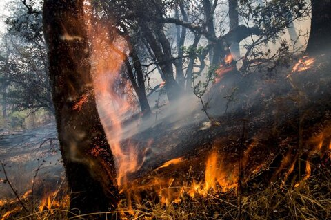 فرمانده یگان حفاظت از سازمان جنگل ها، مراتع و آبخیزداری کشور