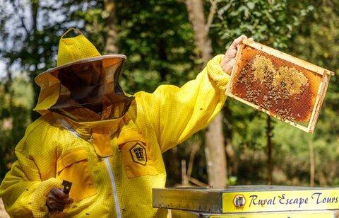 هتل زنبورها